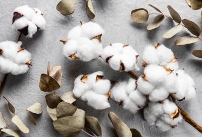 noces de coton